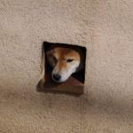 俺には絶対に吠えてくる犬 - 2013/03/02 12:31