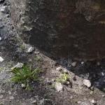 木と雑草 - 2013/03/15 14:19