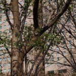 幹の表面 - 2013/03/15 14:29