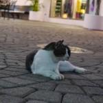 グアムにも野良猫はいる - 2013/05/06 21:40