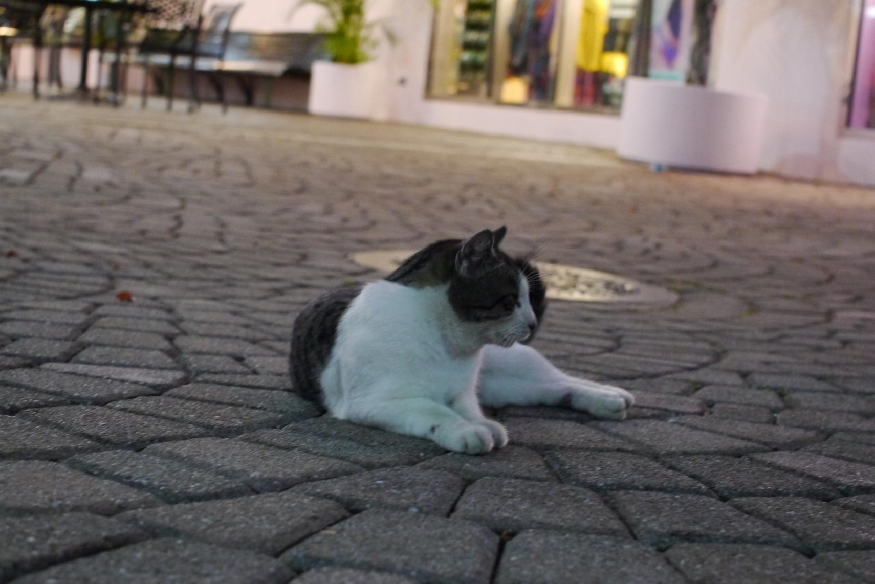 グアムにも野良猫はいる