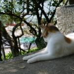 神社の猫 - 2015/09/19 13:12