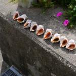 貝が並べられていた - 2015/09/19 14:14