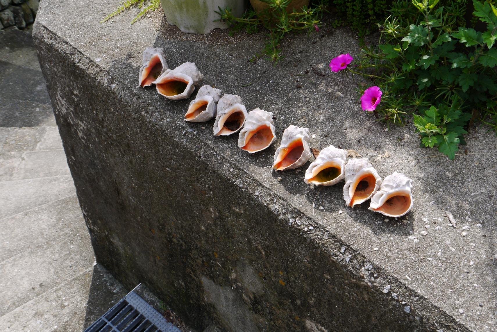 貝が並べられていた