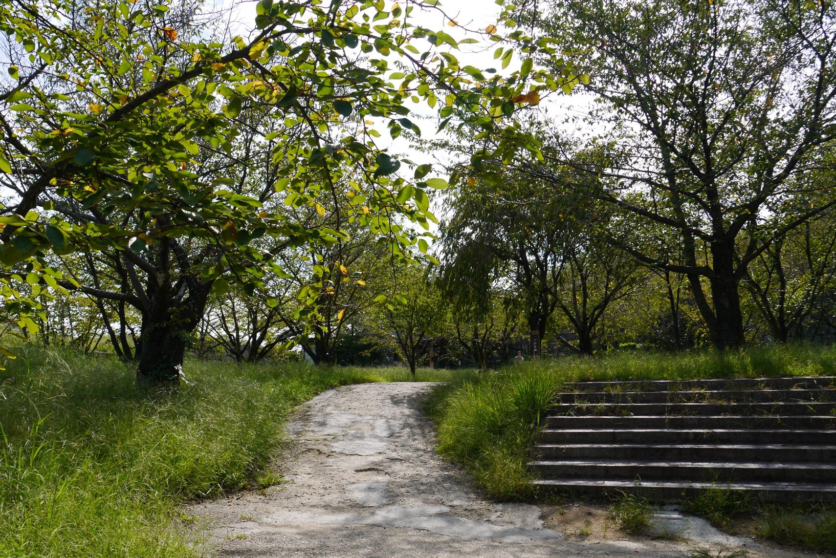 丸亀城内の緑地的な