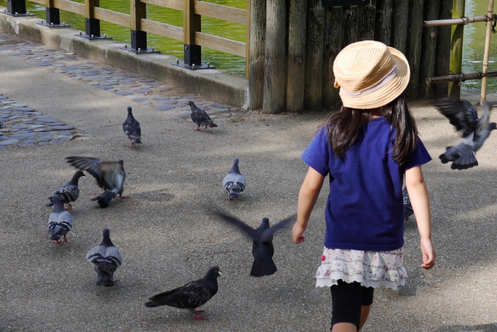 子どもと鳩